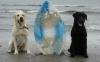 Tucker & Jag at the Beach