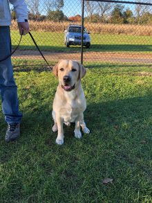Why Our Dogs Make Us Thankful « Hope Lock Kennels